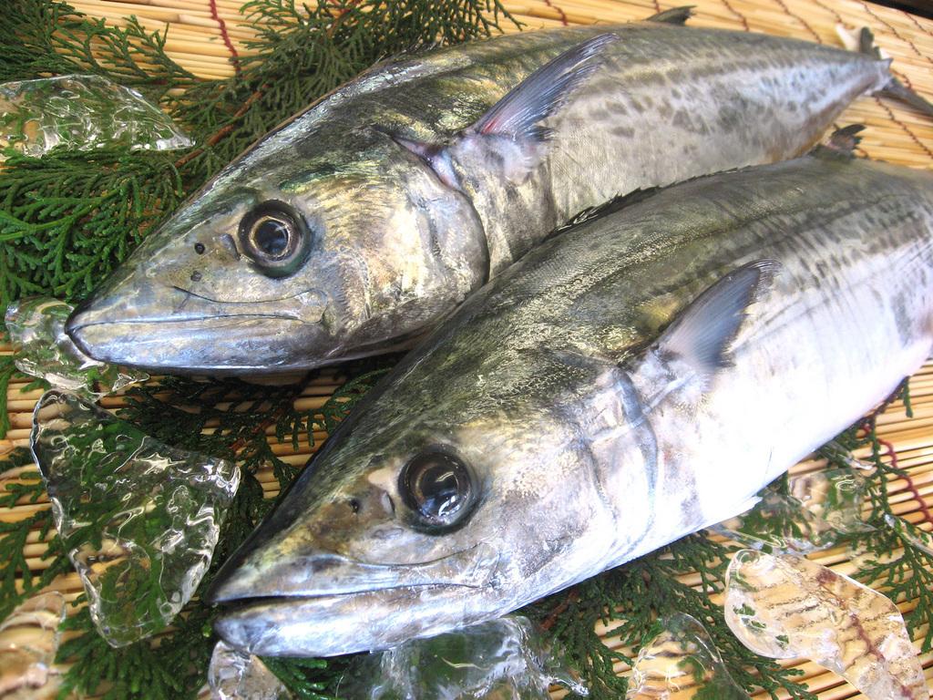 魚篇に春と書いて「鰆-さわら-」という通り春が旬として有名な鰆ですが、 実は脂ののった秋も旬! 脂ののったしっとりとした身お造りや焼物など鰆の美味しさをお届け  ...